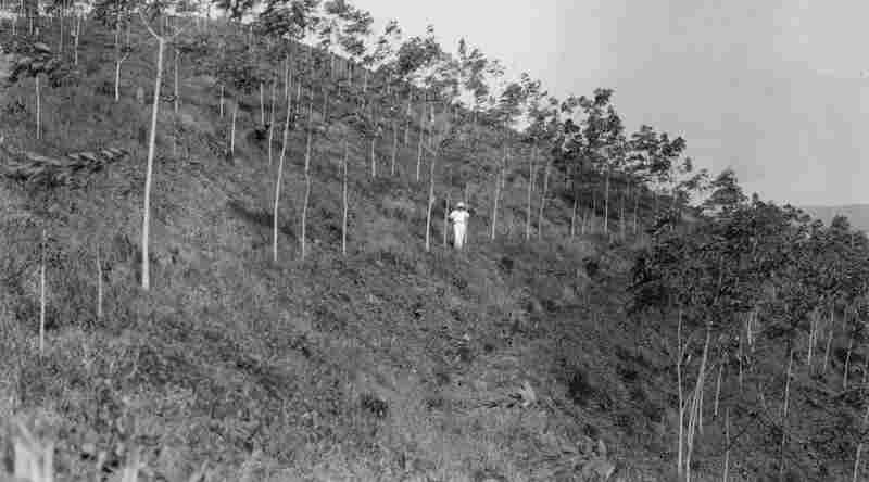 In 1927, Henry Ford bought a tract of land stretching twice the size of Deleware in the Amazonian jungle of Brazil. Fordlandia, as it was called, was meant to be a large rubber plantation.
