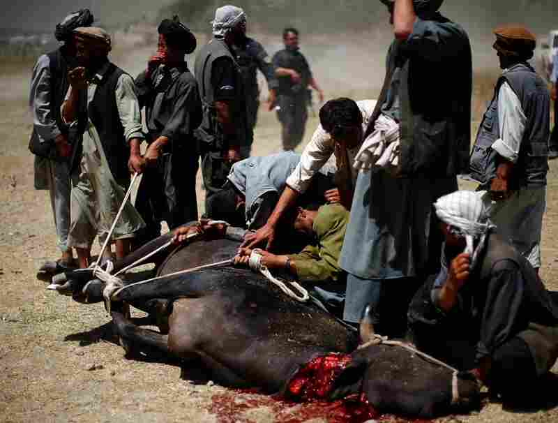 Farmers from the Kayan valley slaughtered a sacrificial bull to mark Karzai's arrival.