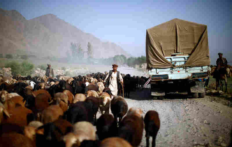 The challenge is getting to these remote regions, as roads are nearly impassable. Trucks meet up with donkey teams at selected locations along the road. The donkeys then travel to remote villages where the polling places will be set up. A sheep herder tries to protect his flock from huge Russian-made trucks.