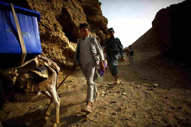 More than 800 donkeys will be used by the United Nations and the election commission to deliver voting materials to remote villages.