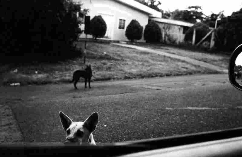 Dogs roam the streets.