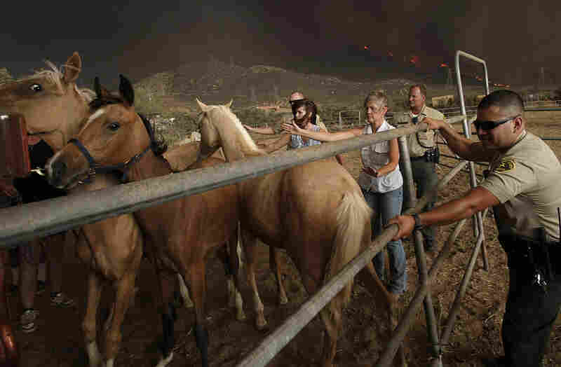 Los Angeles County Sheriff deputies and residents help evacuate horses from the hills above Acton on Sunday.