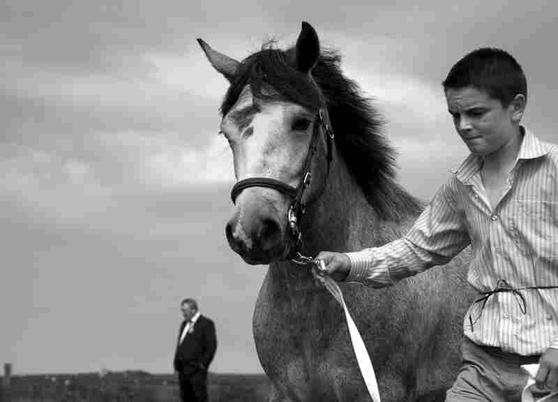 """Connemara Pony Show Judging, Ireland, 2007,"" Josef Tornick, Santa Fe, United States, honorable mention"