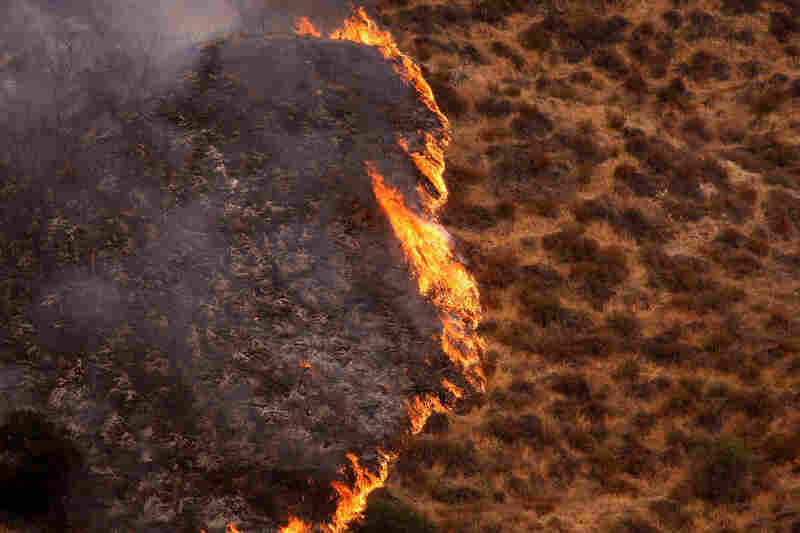 The Station Fire moves through brush Tuesday in Sylmar, Calif.