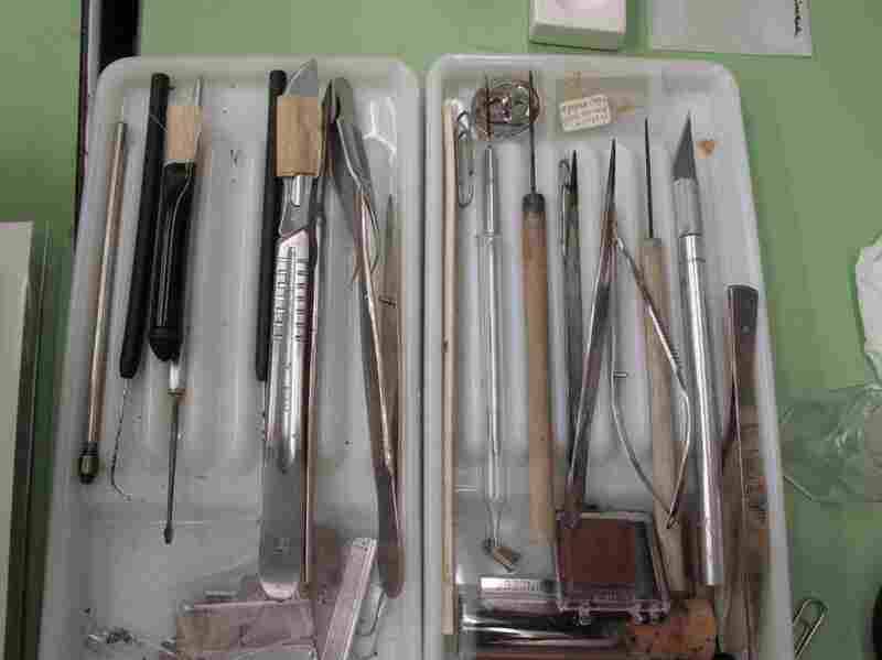 A scientific illustrator often uses tools of other trades. Tangerini uses surgical tweezers, picks and X-Acto knives to pull apart and examine her specimens.