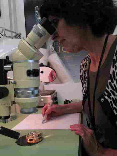 Tangerini looks through a microscope to sketch the flowers. She is aided by the round mirror fastened to the side of the instrument, which reflects the image of her hand into her field of vision as she draws.