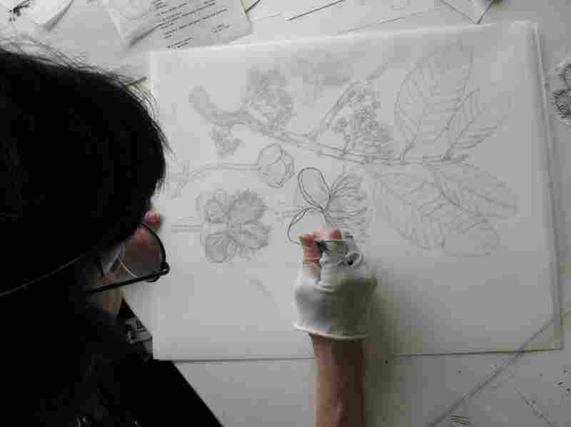 Tangerini says she loves the feel of pen on paper, as well as the  challenge of drawing clean lines. Here, she uses a brush with only a few hairs for accuracy, drawing the final inked image of a flower.