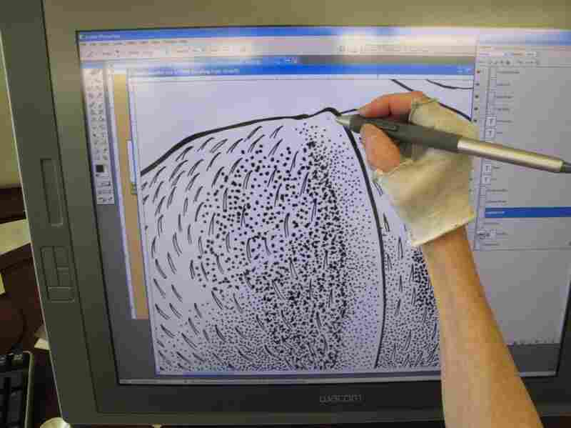 Despite her love for pen and paper, Tangerini has begun using a computer. This allows her to blow up images, making them easier to see and, she hopes, prolonging her career. Here, she stipples a drawing of the seed of a  Tetracera asperula, also from  Guyana. Stippling is a technique that uses dots to create shading.