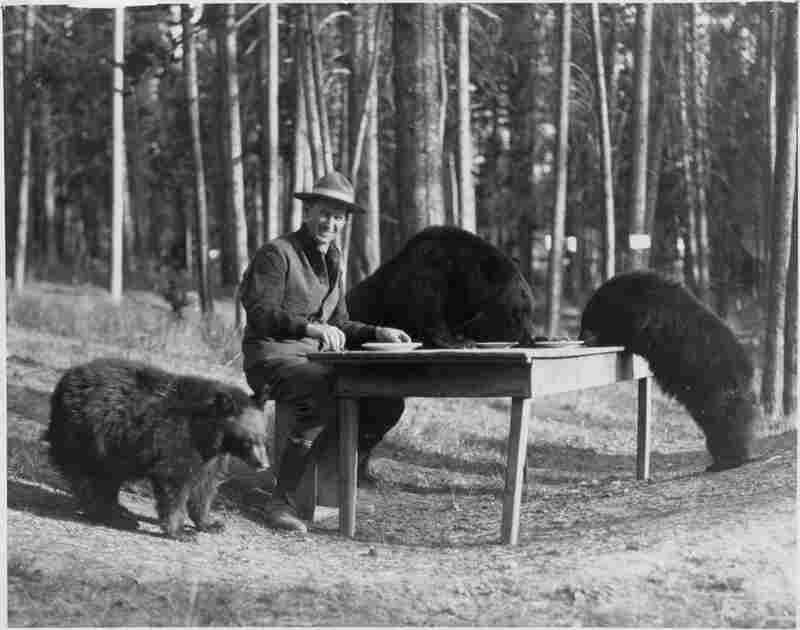 Park regulations discouraged tourists from feeding bears, but even Horace Albright (pictured in 1922), who later became director of the National Park Service, realized what a popular attraction they were.