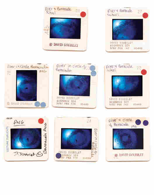 This set of color slides shows photographs taken by David Doubilet, who is known for his underwater photography.