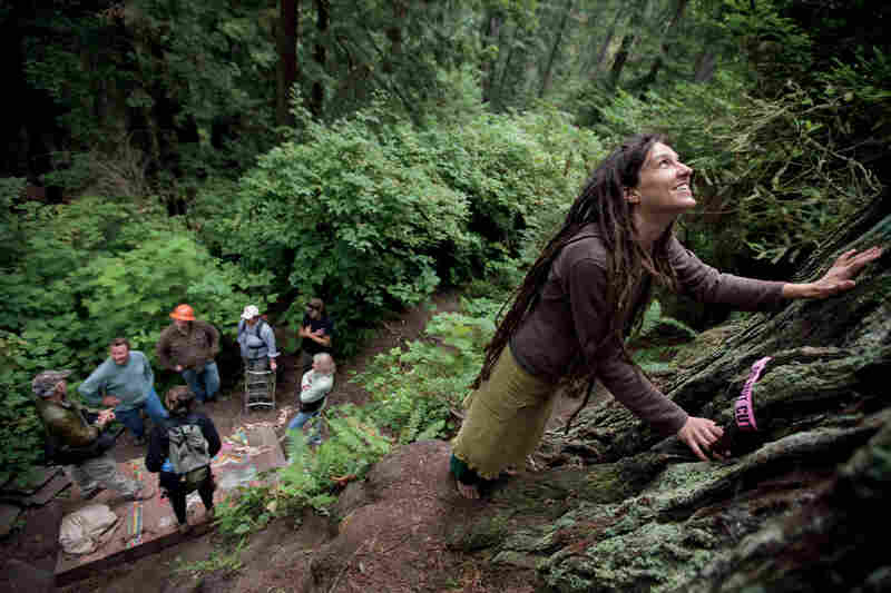 Activist Amy Arcuri lays her hands on a giant she says is nearly 2,000 years old. After a long struggle, many trees such as this one have finally been declared off-limits to loggers.