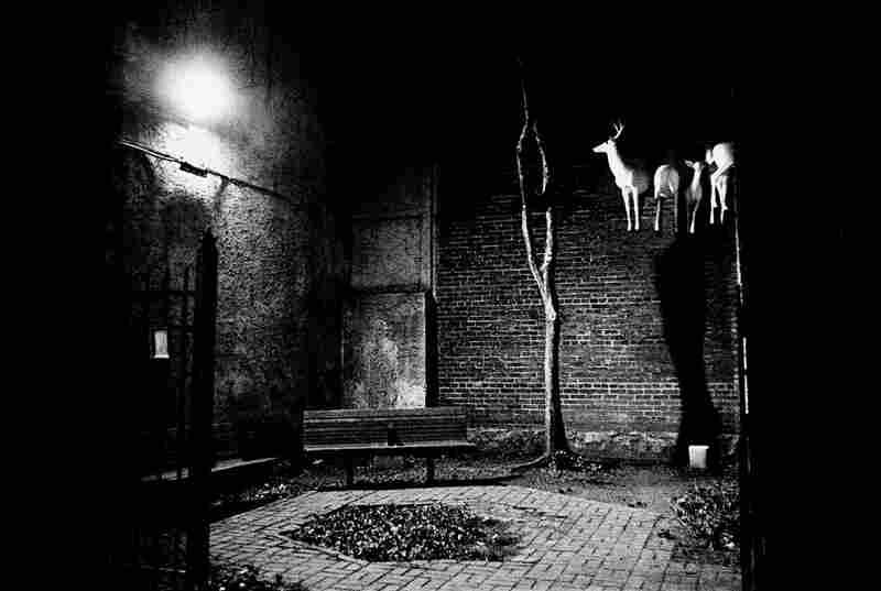 """""""Reindeers in a park,"""" Phildelphia, 1999."""