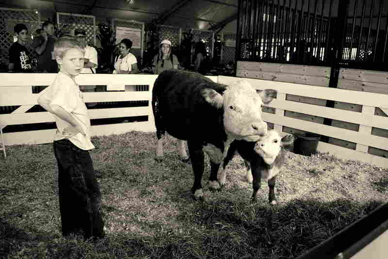 At the Dutchess County Fair in Rhinebeck, N.Y., hundreds of families show off their livestock to visitors.