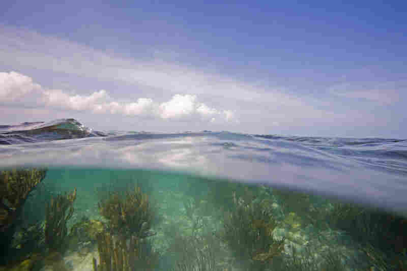 Below the surface in Biscayne National Park, Fla.
