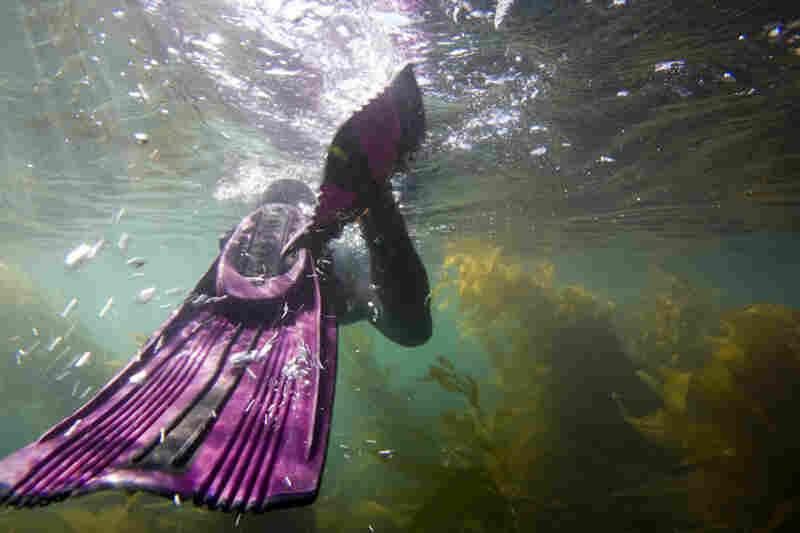 The Marine Sanctuary, Channel Islands National Park, Calif.