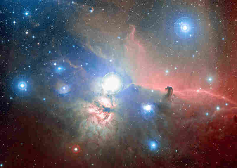 The horsehead nebula, located in the Orion constellation about 1,270 light-years away, is one of the few that is discernible without a telescope.