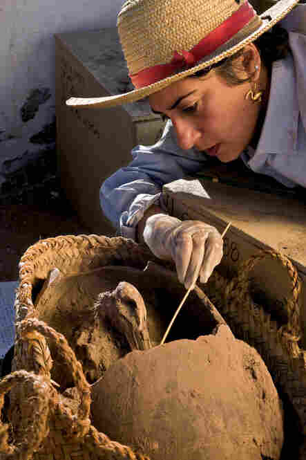 Archaeologist Salima Ikram flicks at mud to free an ibis, a type of bird and symbol of the god Thoth, from the earthenware jar in which it was buried 2,700 years ago.