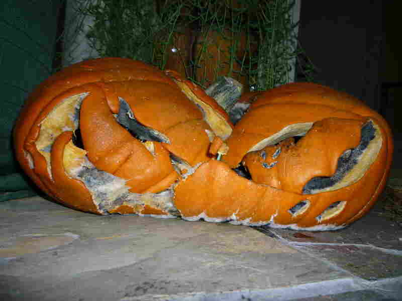 Metaphor for a collapsed economy pumpkin. Submitted by Tricia Toomey and Paul Hardwick.
