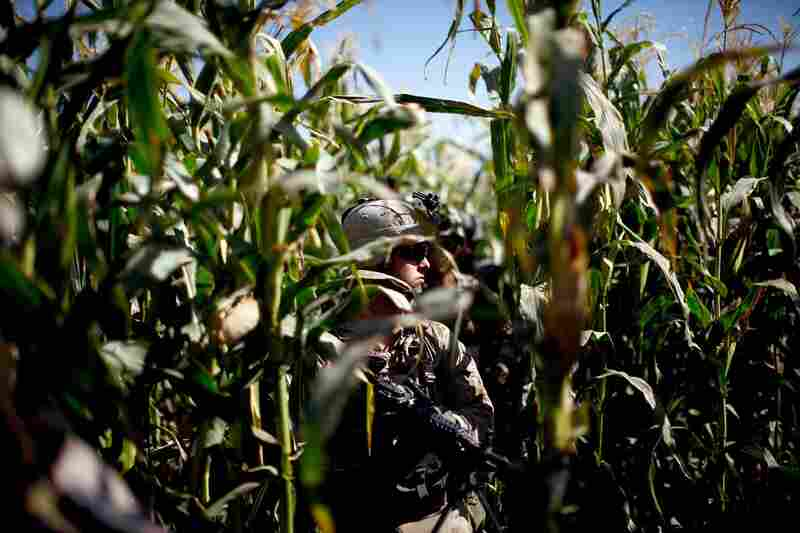 A Marine walks through a cornfield after word of a potential ambush was received from village locals. The corn is problematic for the Marines, as insurgents use the fields as cover to launch attacks and plant bombs.