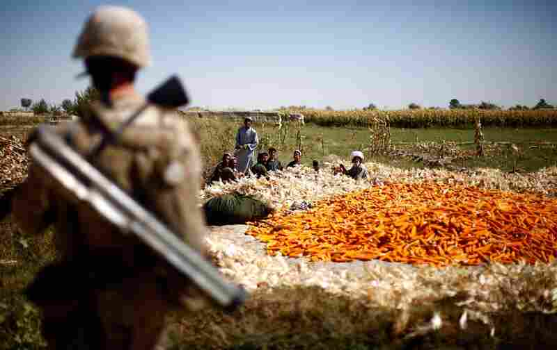 Local farmers harvest corn by hand in the Helmand River valley while being watched by Marines.