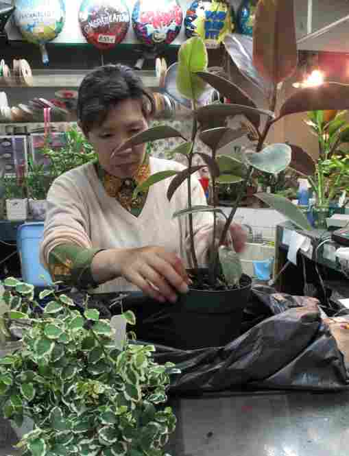 An employee of a plant stall bags two house plants for a customer.