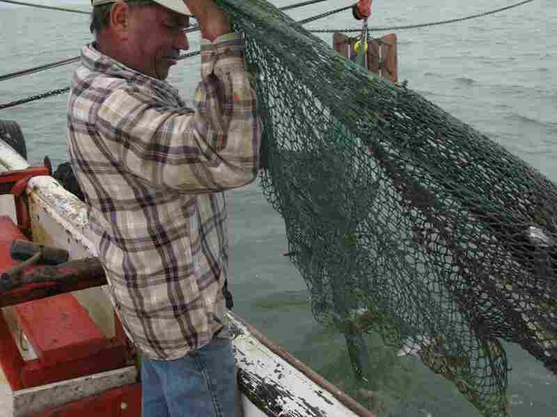 Capt. Wayne Magwood, a third-generation shrimper, hauls in a net on his trawler, the Winds of Fortune.  His day starts in the dark, at 5 a.m.
