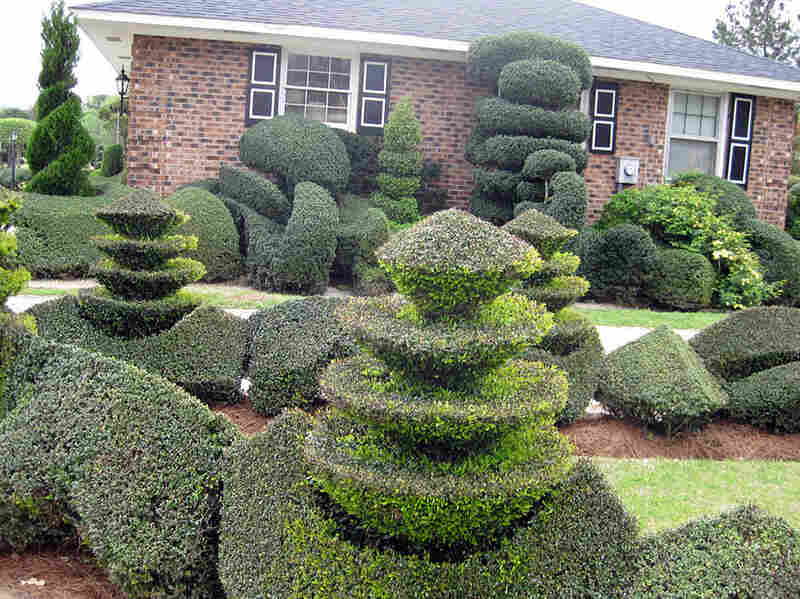 Some 400 topiaries fill the yard of Pearl Fryar's Bishopville, S.C., home.