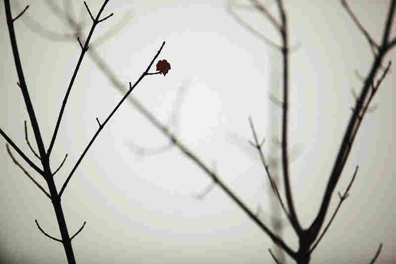 A single red maple leaf clings to a bare branch in Pembroke, N.H.