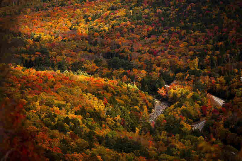 Fall foliage viewed from the Welch Mountain in Waterville Valley, N.H.