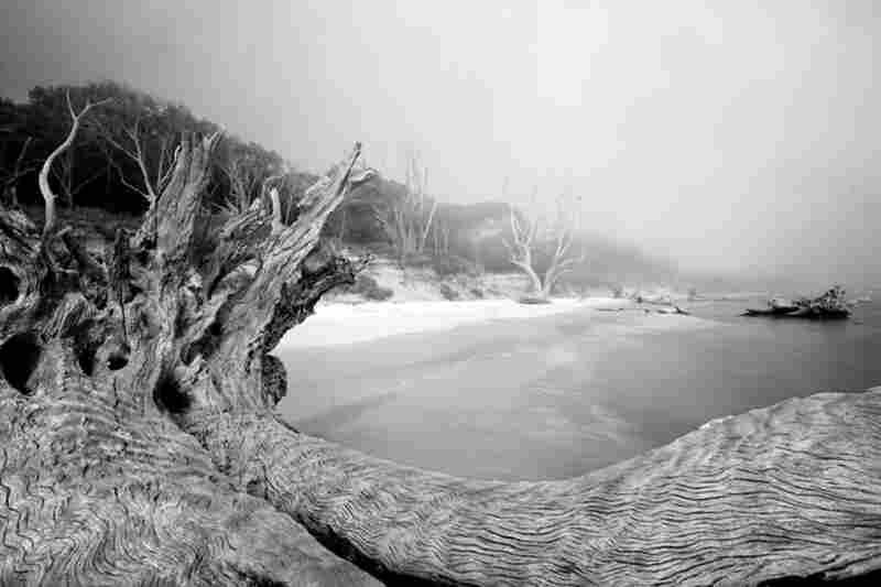 Big Talbot Island 6
