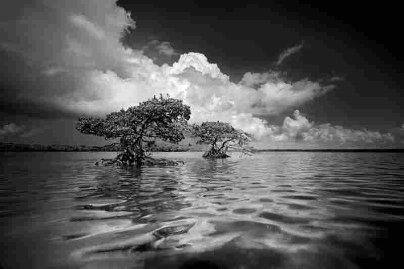 Gaskin Bay 5