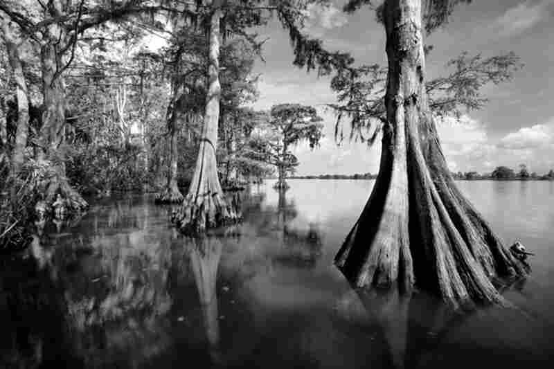 Apalachicola River 1