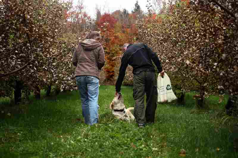 Samantha Dodge (left) and Brandon Rich play with Wood's dog Newton while picking their own apples at Poverty Lane. The dog spends a great deal of time socializing with people in the orchard.