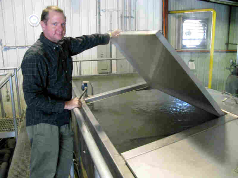 AmeriPure owner John Tesvich says the secret of pasteurization is controlling the temperature accurately to kill bacteria without cooking the oyster. The oyster is no longer alive, but it is still considered raw.