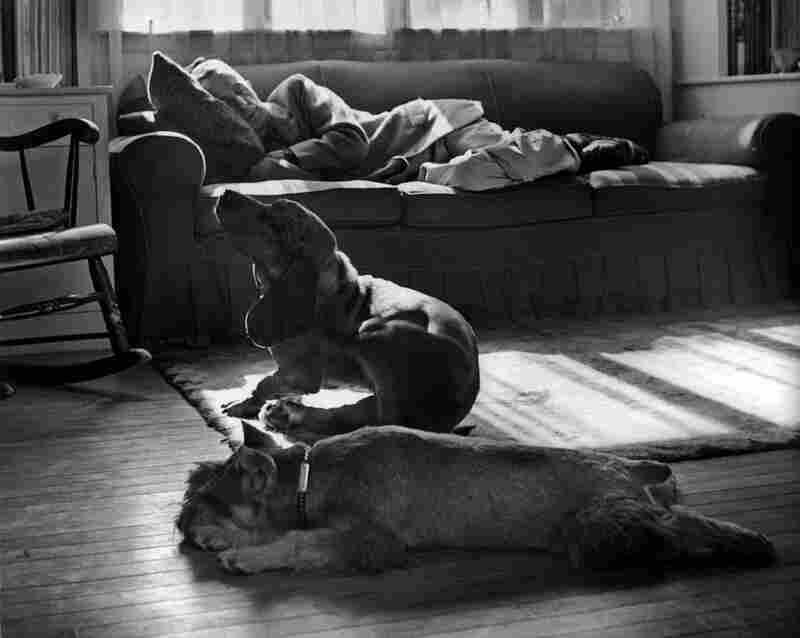 Rockwell rests in his studio with his dogs, circa 1960s.
