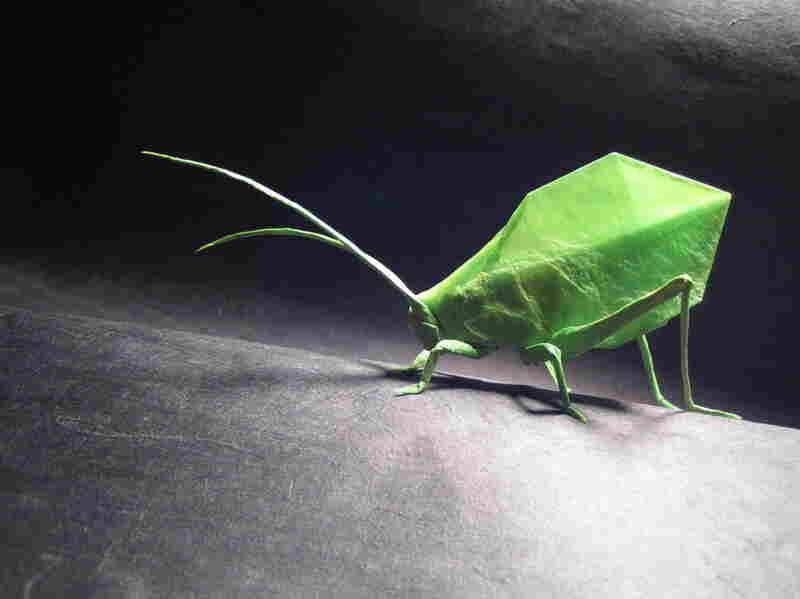 Brian Chan, Leaf Katydid