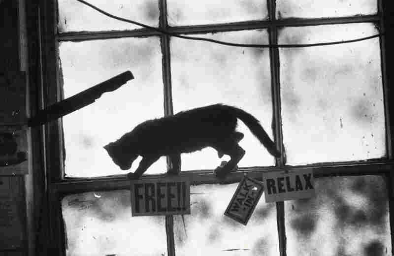 Smith's cats make frequent appearances in his photographs.