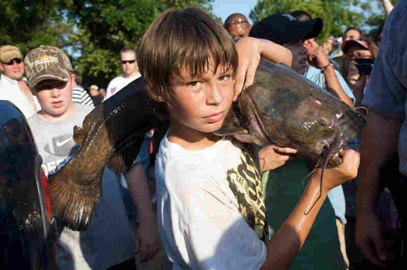 "Okie Noodling competition in Pauls Valley, Okla.  As Andrew Owens writes, ""they've got catfish the size of fifth graders sleeping in holes in the muddy river banks.  And what better way to pull one out than with your bare forearm? ... They call it noodling and consider it a tradition and way of life they are proud to carry on."""