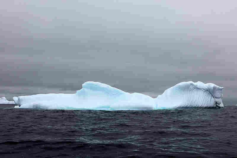"""Horse head iceberg"""
