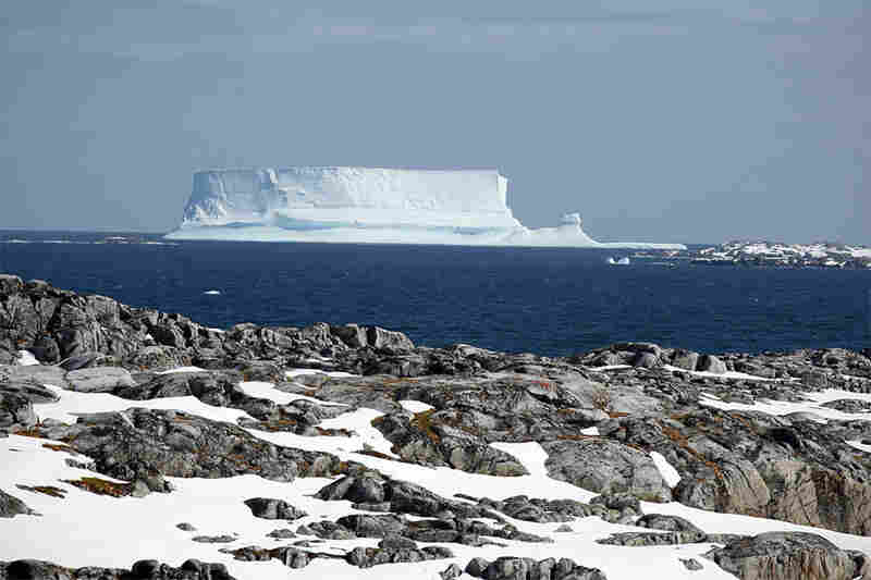 These iceberg photos were all taken in the waters around Palmer Station. The bergs blow into the area for a few days or weeks, then disappear. People at Palmer say that there have been an above-average number of icebergs this year.