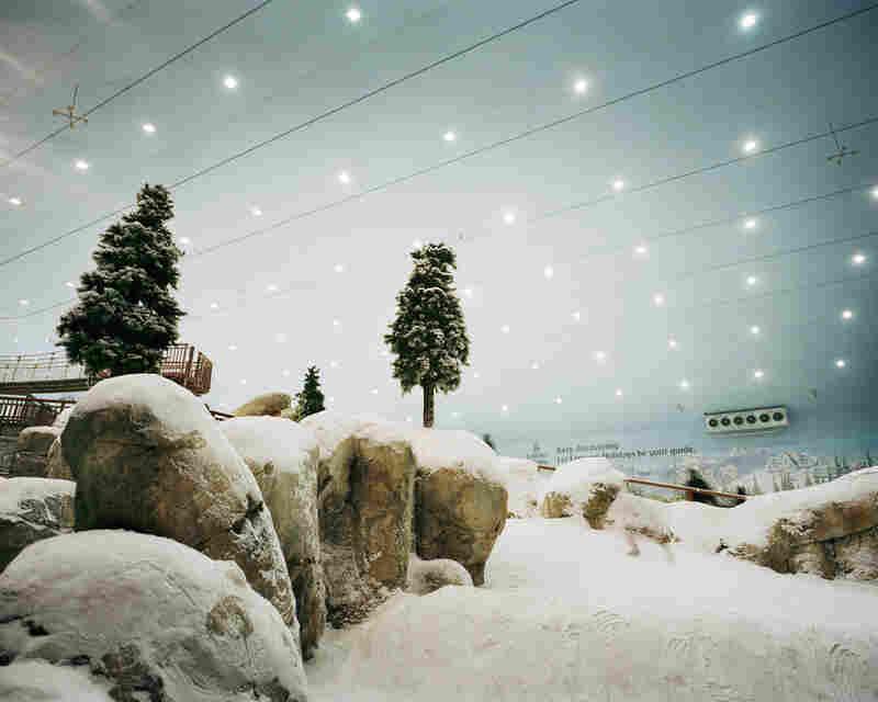 Tree #01, Ski Dubai, 2006