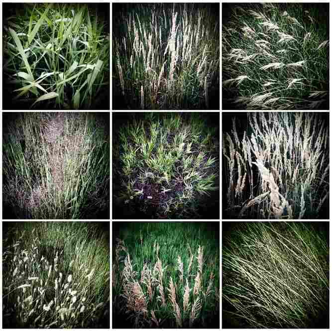 Grass – Boulder, Colo., 2009