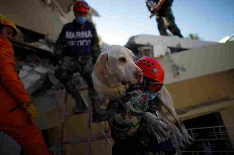 Mexican rescue workers carry their cadaver dog off the roof of the St. Gerard school outside Port-au-Prince.