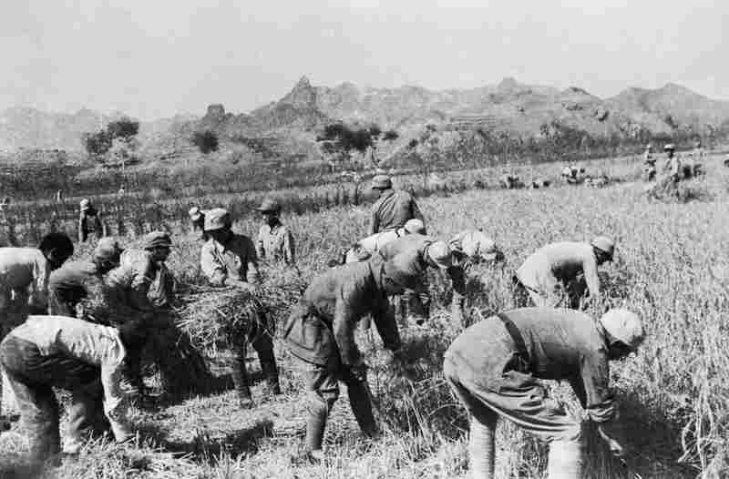 The Eighth Route Army Helping Local People in the Autumn Harvest, 1939. In addition to their conventional representation as fighters, Communist soldiers are portrayed, in this photograph, as an agricultural force that helps local production of food.