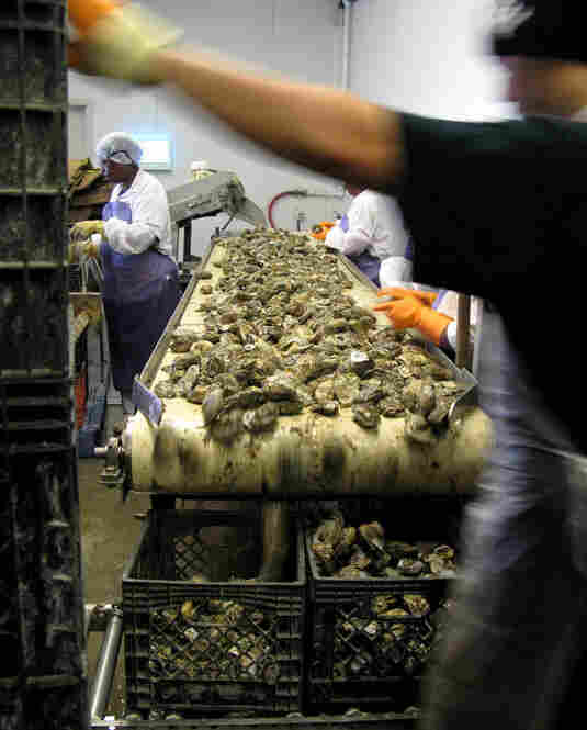 The FDA plan called for raw Gulf oysters harvested between April and October to go through one of several approved treatments – pasteurization, high pressure, quick freezing or irradiation. But the Gulf's oyster industry and many politicians fought the change.