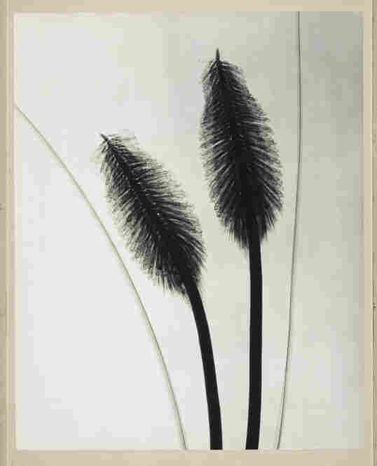 Red Hot Poker, radiograph