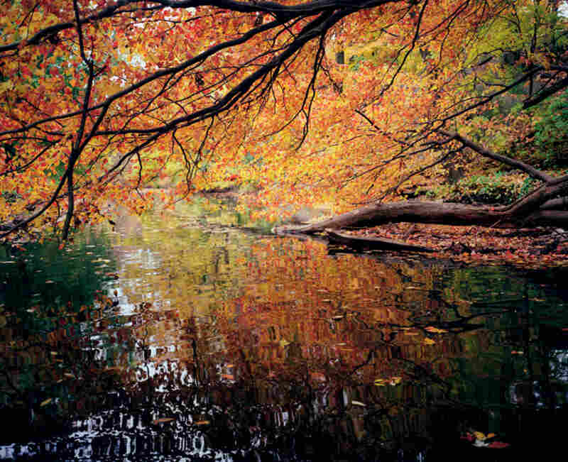 Bronx River, New York Botanical Garden, autumn