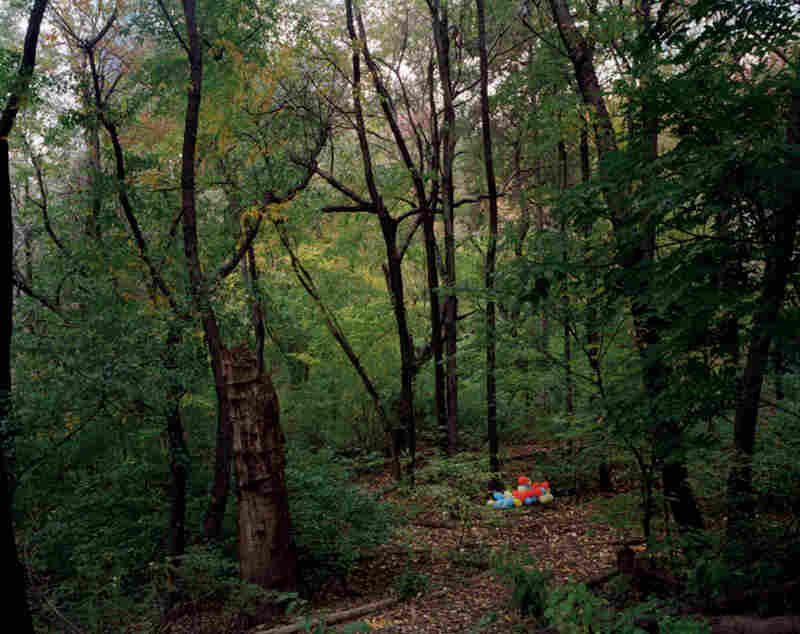 Central Park, Hallett Nature Sanctuary, autumn