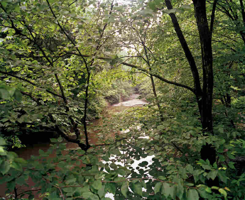 New York Botanical Garden, Bronx River, near the falls at Snuff Mill, summer