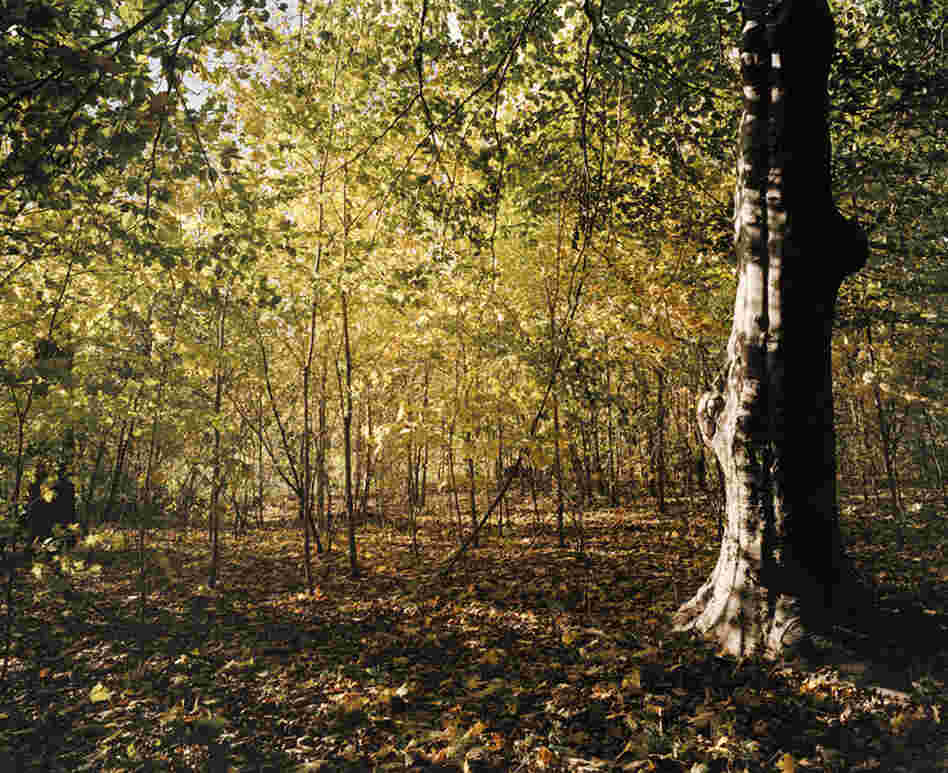 Prospect Park, woods in the ravine, autumn